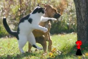 aikido colmar chez les Diables Rouges